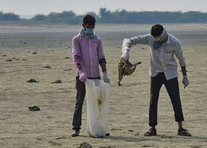 生态灾难!印度西北部拉贾斯坦邦桑珀尔盐湖岸边发现2400具鸟类尸体