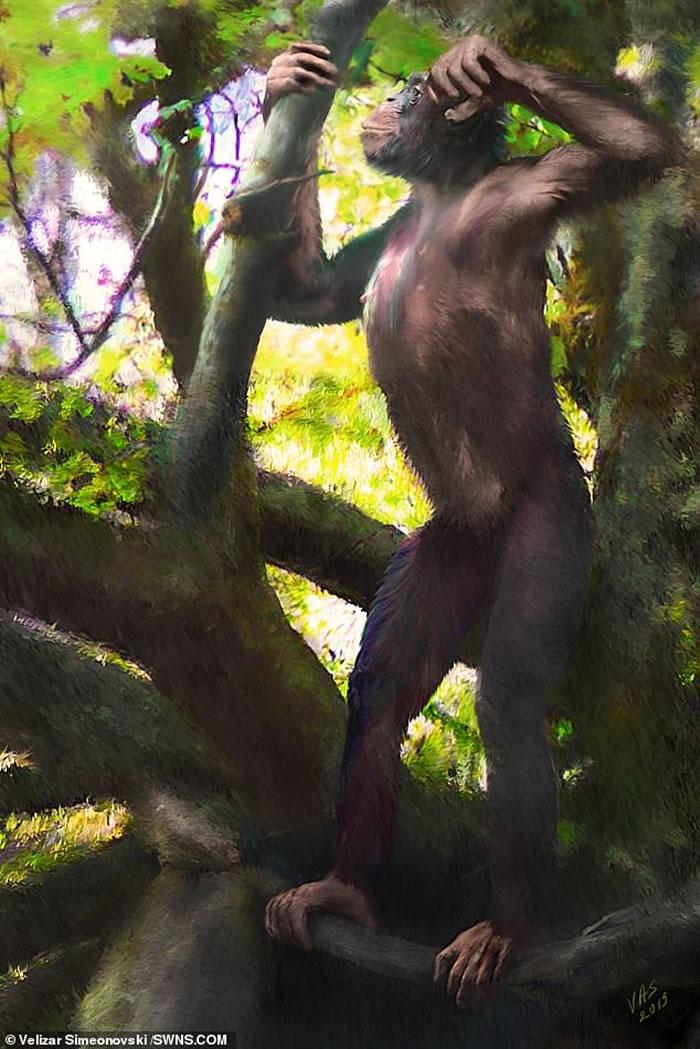 """""""像人又像猿的古猿化石被发现""""能证明进化论错误吗?"""