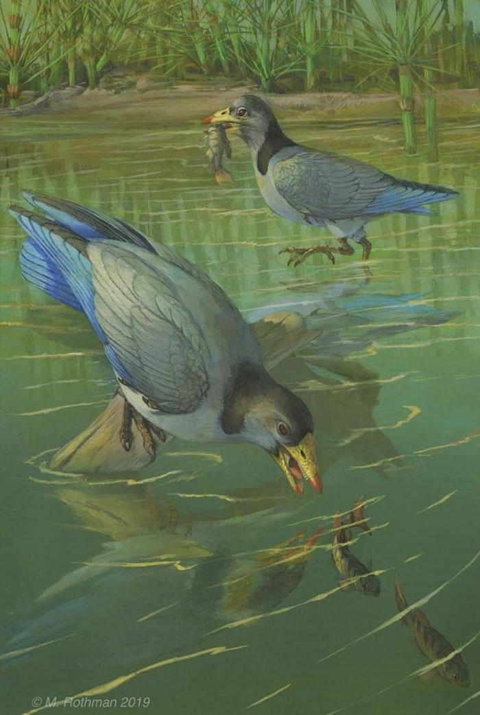马氏燕鸟捕食鱼类复原图