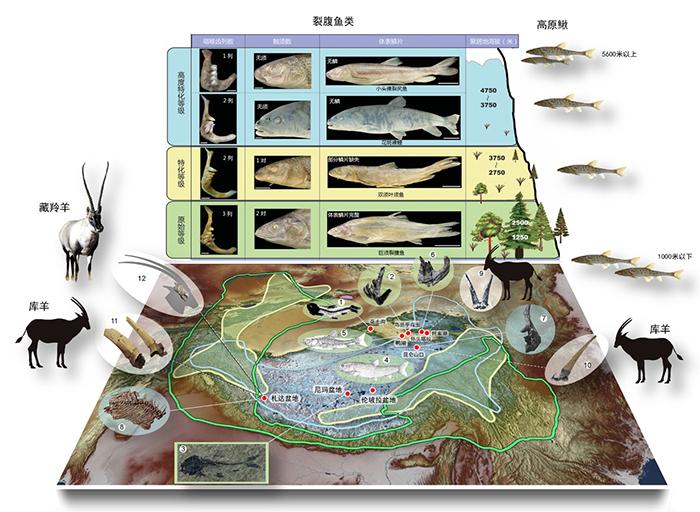 """鱼类和哺乳动物""""土著物种本地起源""""模式(Local origination of endemism of fishes and mammals in the T"""