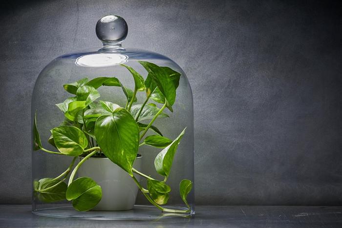 今年室内园艺蓬勃发展,许多受欢迎的室内植物,是以当作净化家中空气的好办法来营销,出售给急切的消费者。 然而,新研究持续显示室内植物在净化家中空气方面的功能近乎零