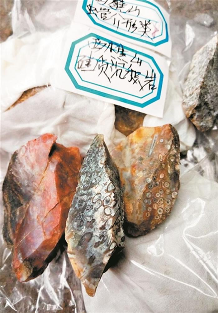 广东西樵山古人类使用过的石器上发现五千万年前古生物化石