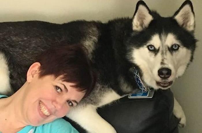 美国威斯康辛州雪橇犬Sierra闻出主人卵巢癌四次