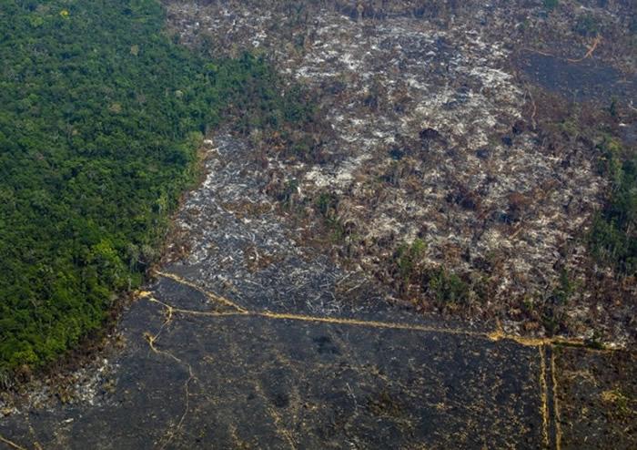 过度伐林亦加速全球气候变化。过度伐林亦加速全球气候变化。