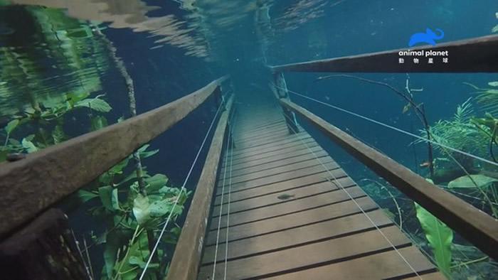 雅定雨林没入水中,连吊桥都沉入清澈的水底。