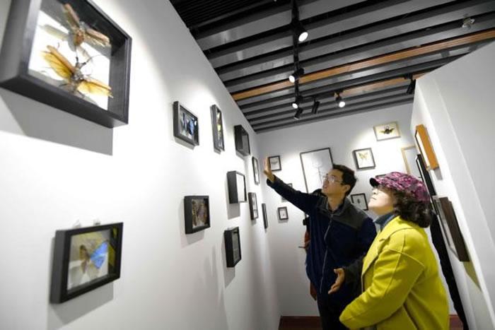 国内首家坐落于书店的自然博物馆——位于北京中关村图书大厦的石探记博物科学馆