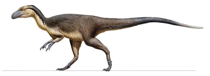 澳洲发现的一批羽毛化石证明了如画中所绘的小型肉食恐龙曾长出隔热羽毛以求在南极圈内生存。 ILLUSTRATION BY PETER TRUSLER