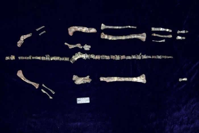 中国重庆云阳中侏罗统新田沟组的一新鸟臀类恐龙——磨刀溪三峡龙
