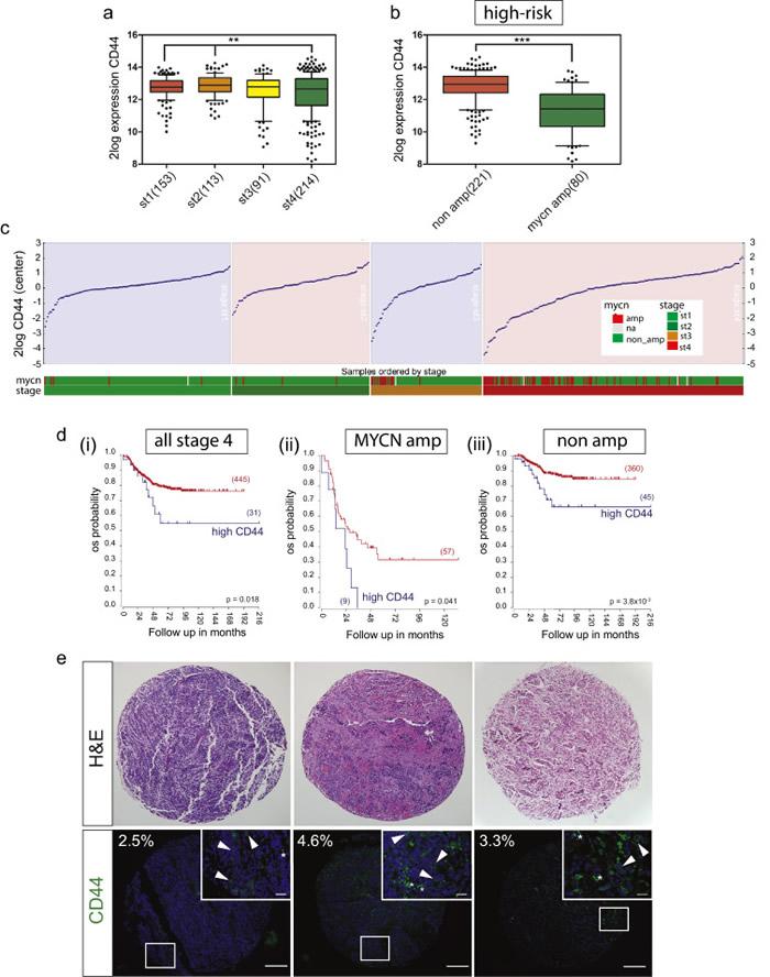 对抗神经母细胞瘤(一种儿童期癌症)方面又迈出一步