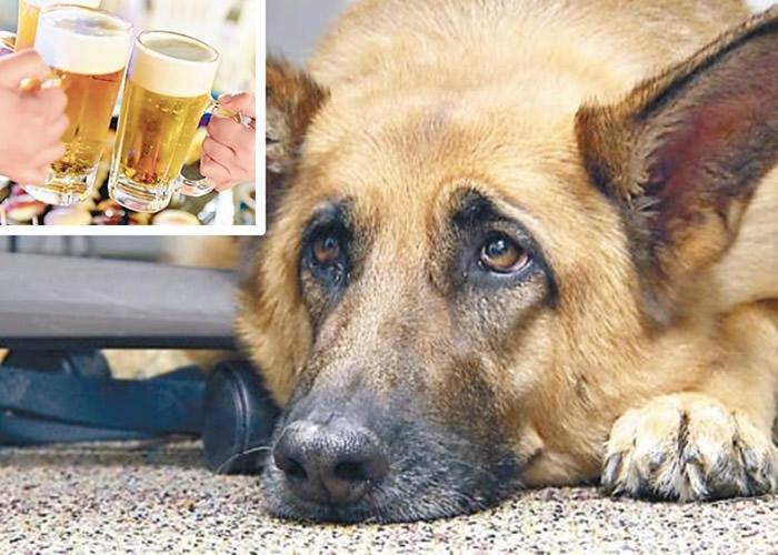 哥斯达黎加酿酒公司与宠物狗社区合作推出专门供宠物狗饮用的啤酒