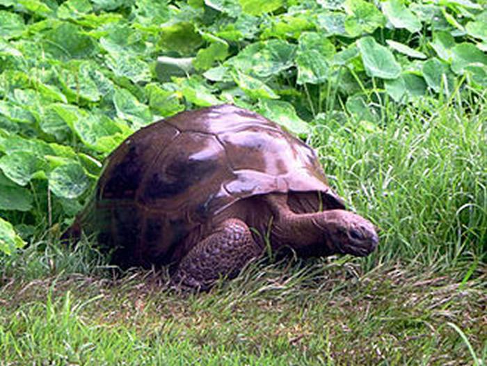 "CNN整理出地球上最古老的生物:187岁的陆龟""乔纳森""和68岁的黑背信天翁""智慧"""
