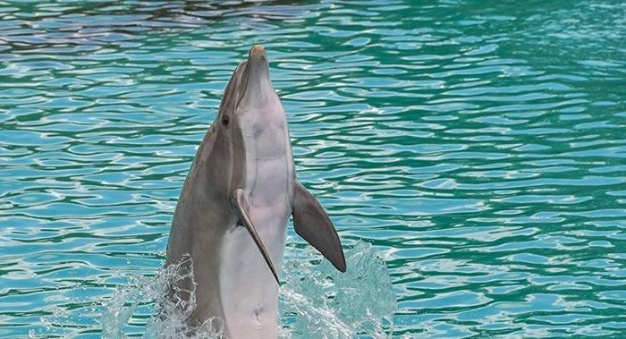 墨西哥坎昆海豚乐园两只宽吻海豚袭击十岁英国女孩 并试图将她淹死
