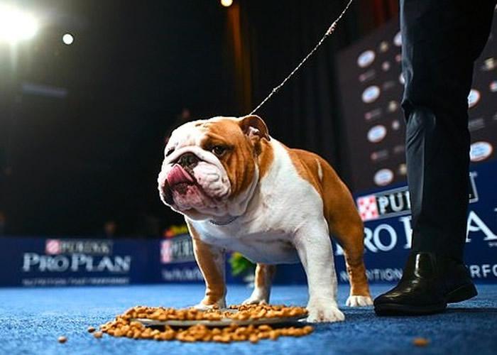 它看来很满意狗粮贺礼,吃得津津有味。