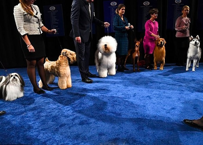 其他进身决赛的狗狗,左一为博诺。