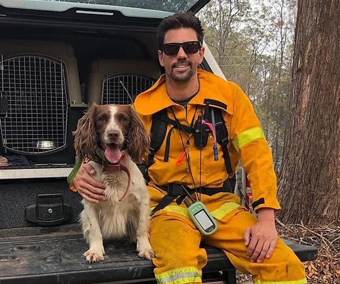 泰勒及其训练员泰特救出多只树熊。