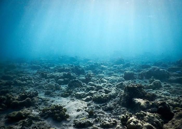 已死珊瑚礁只得一片寂静。