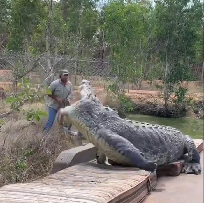 """澳洲北领地致力保护动物的男子Matt Wright放生5米长巨鳄""""暴龙"""""""