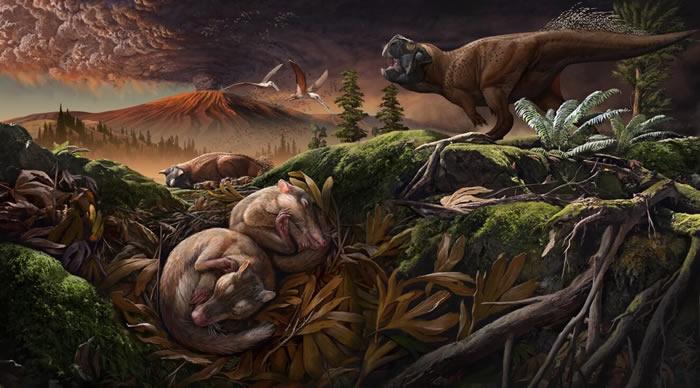 白垩纪早期哺乳动物新化石(Origolestes lii)弥合耳演化转变中的缺口