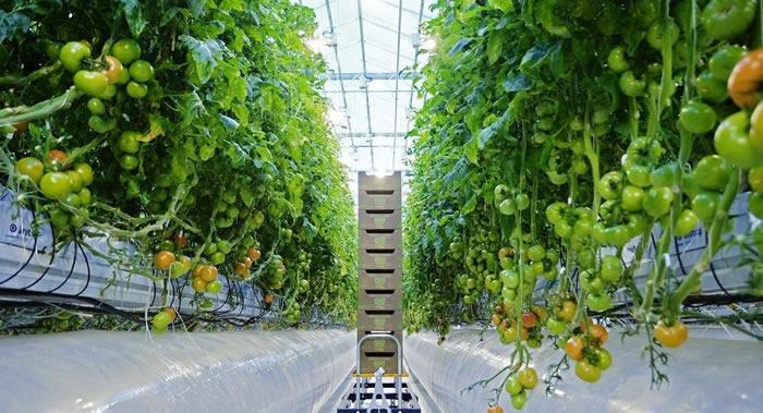 植物面对压力会向周围发出超声波