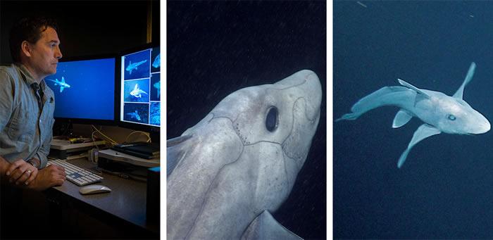 """生殖器长在头上的3亿年前活化石""""鬼鲨""""蓝银鲛真面目曝光"""