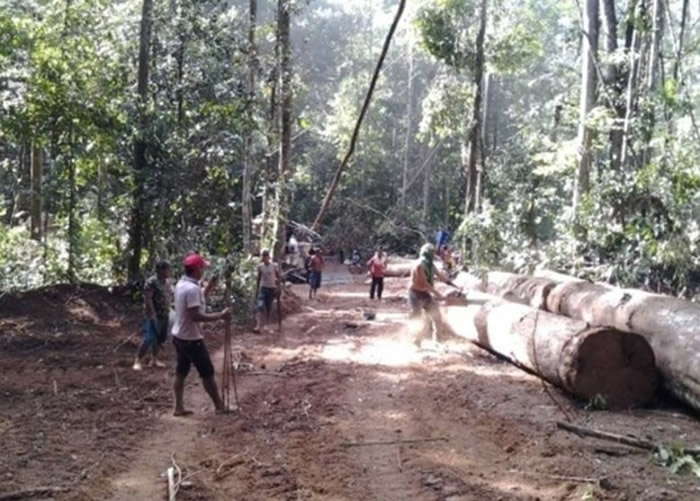 巴西雨林非法伐木情况严重。