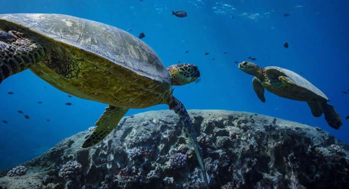 《新科学》杂志:海洋中的氧气正在迅速流失