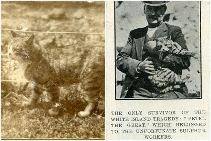 新西兰最危险怀特岛火山爆发 史上大喷发曾造成10名矿工全遭熔岩活埋仅剩一只猫