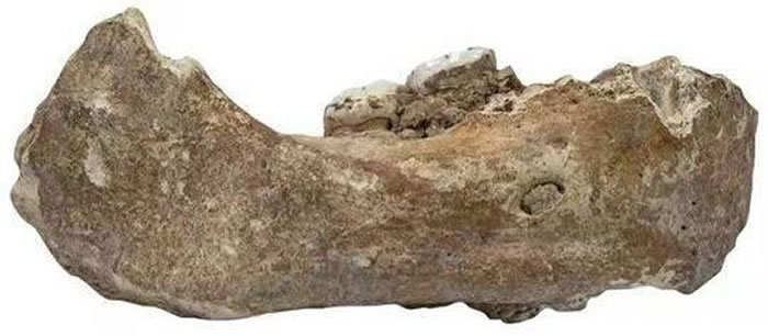 甘肃夏河白石崖溶洞丹尼索瓦人化石入选《Archaeology》2019年度世界十大考古发现