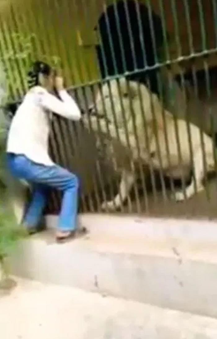 巴基斯坦克拉嗤动物园员工喂食狮子时手臂被当成大餐