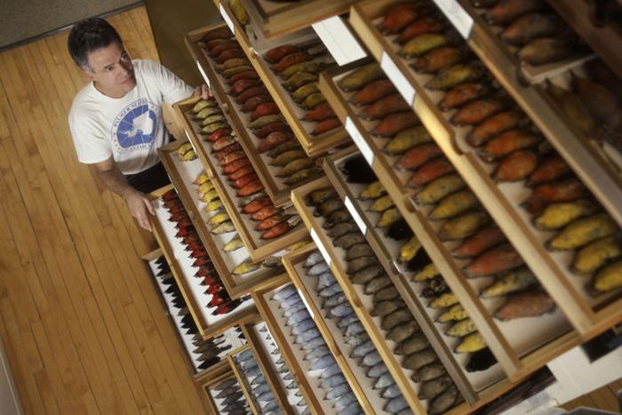 7万多件标本测量的工作,全由乌伊拉德一手包办。 图片来源:密西根大学新闻稿/Field Museum, John Weinstein.
