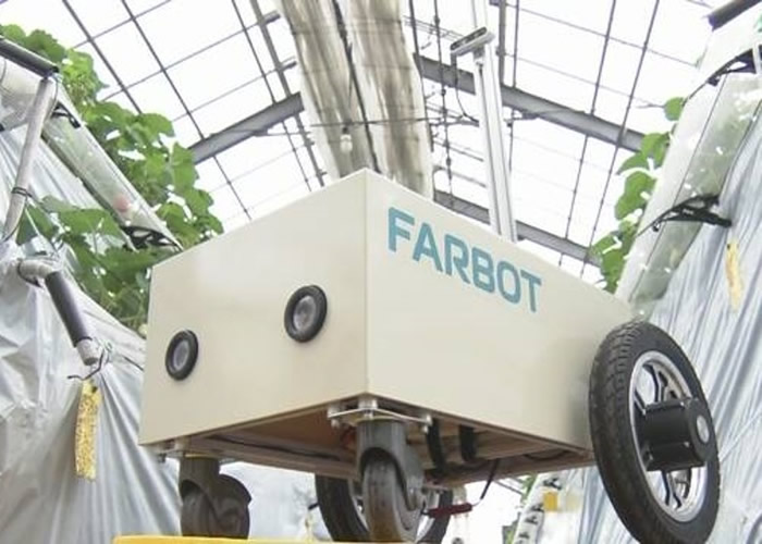 日本埼玉县越谷市准备引入能预测草莓收获量的人工智能机器人