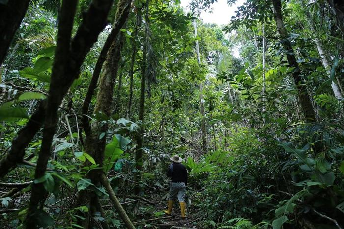 科学家们在厄瓜多搜寻马铃薯、茄子、稻米和番薯的野生近缘种。 PHOTOGRAPH COURTESY L.M. SALAZAR, CROP TRUST