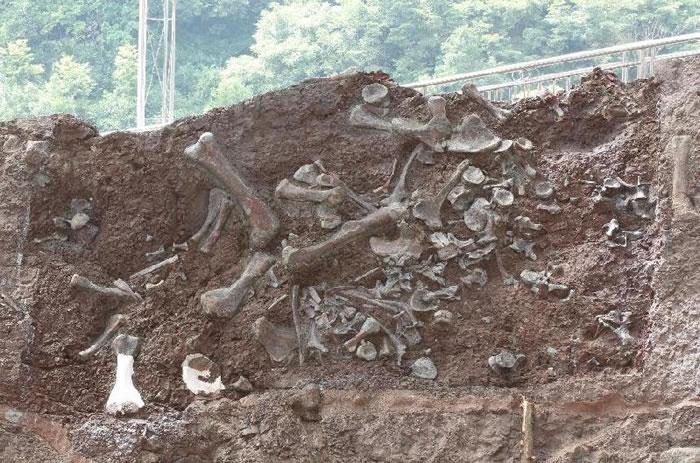 重庆云阳新田沟组发现新恐龙动物群 命名两个恐龙新属种:普安云阳龙、磨刀溪三峡龙