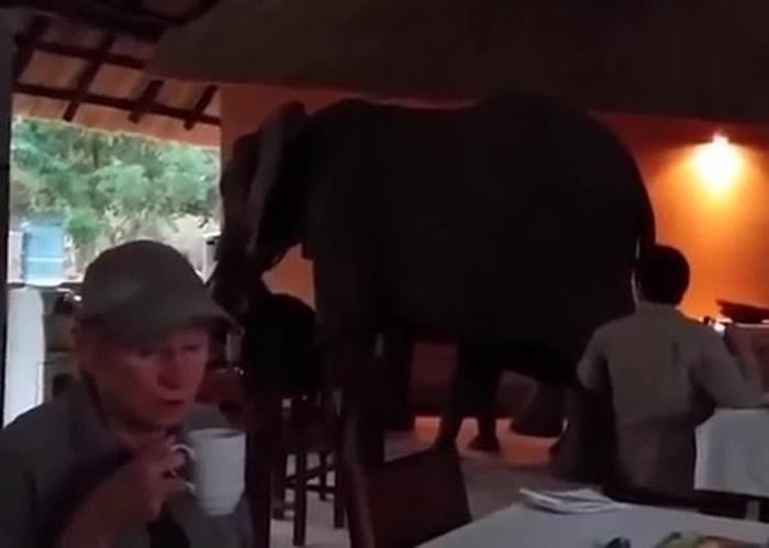 用餐区内的游客,被突如其来的3头象吓呆。