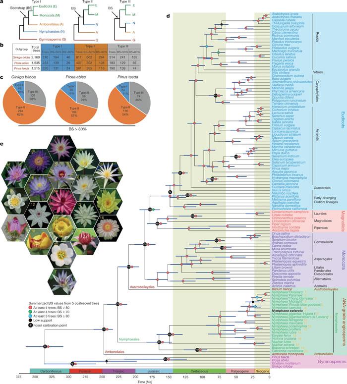 Nature发表福建农林大学张亮生课题组的研究论文《睡莲基因组和早期开花植物进化》