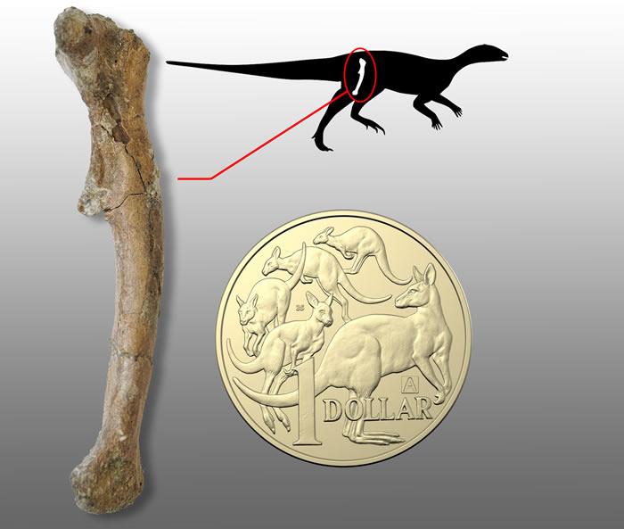 古生物学家首次在澳大利亚境内发现婴儿恐龙骨骼化石 距今1亿年前体重仅198克