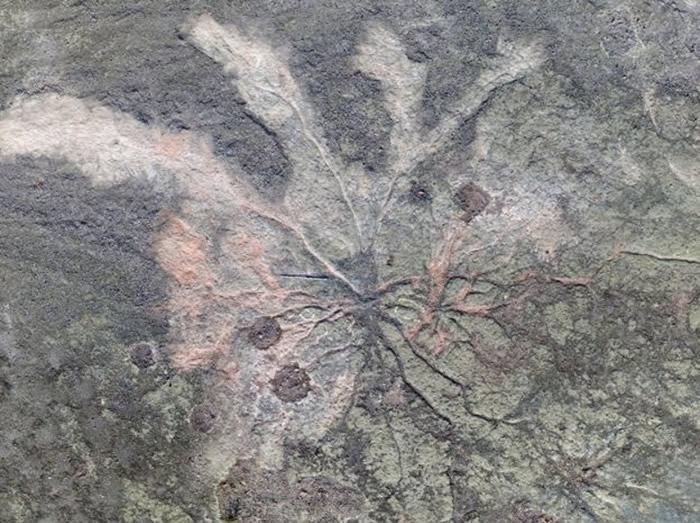 美国纽约州废弃石矿场发现地球上最古老的化石森林 距今3.86亿年前