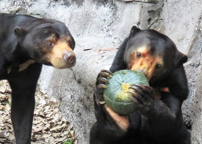 日本动物园为园中动物安排冬至节目