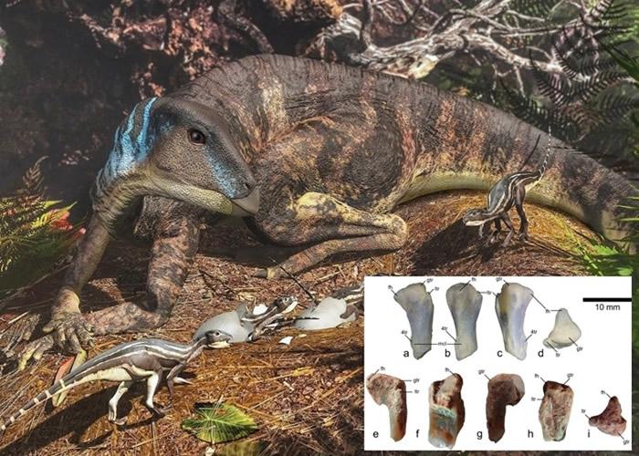 澳大利亚发现的2.5厘米化石胫骨揭1亿年前南极恐龙生态