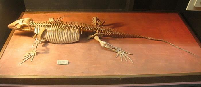 加拿大发现的3亿年前蜥代龙化石揭示已知最早的表明四肢脊椎动物照顾幼崽的证据