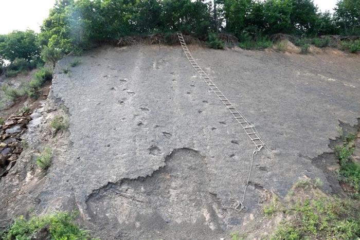 托一位化石爱好者的福 黑龙江首次发现大规模白垩纪恐龙足迹群