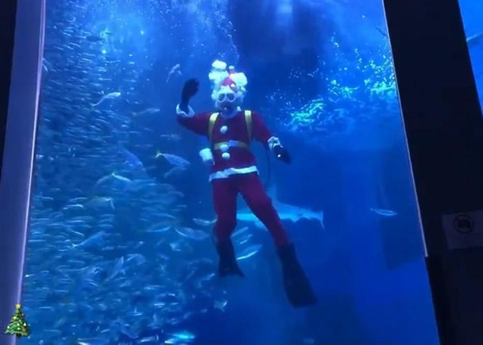 日本神奈川水族馆展开圣诞老人与5万条沙甸鱼及魟鱼共游活动