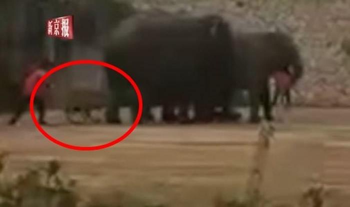 湖南长沙生态动物园大象馆大象疑似发情踩死驯兽员