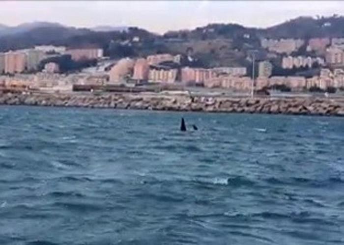 较早前意国海岸防卫队亦拍到同一队杀人鲸出现。