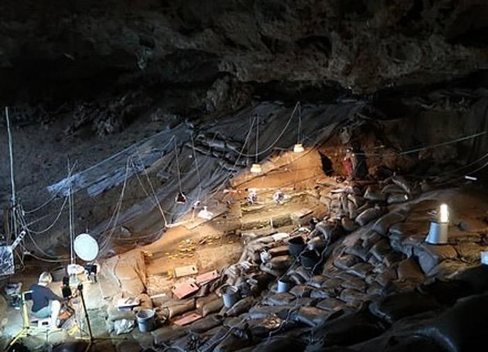 烧剩的根茎于南非洞穴发现。