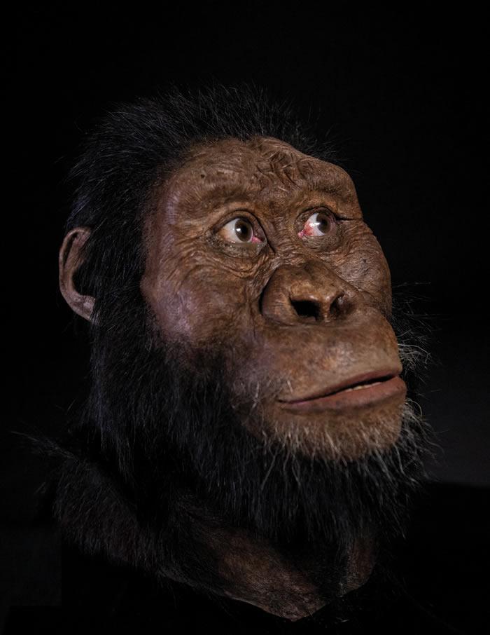 埃塞俄比亚380万年前的南方古猿化石将重绘人类谱系树?