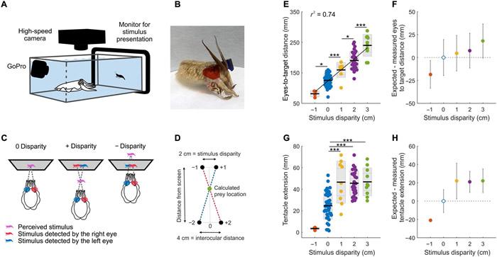 墨鱼在寻找猎物时会用与脊椎动物类似的视觉来感知深度