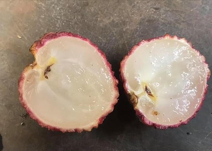 农夫培育出澳洲第一棵无核荔枝树 吃起来像菠萝