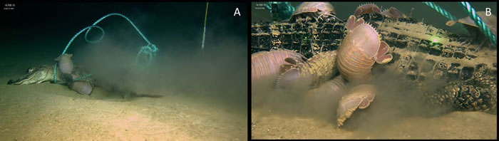 将死鳄鱼放到深海里会怎么样?