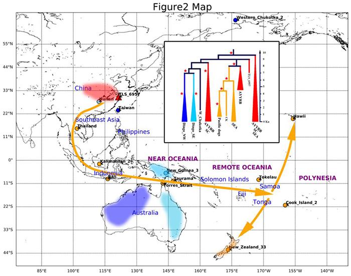 图2 红色区域代表了澳洲野犬、新几内亚歌唱犬和殖民时代之前的太平洋家犬的可能起源地。(张明供图)